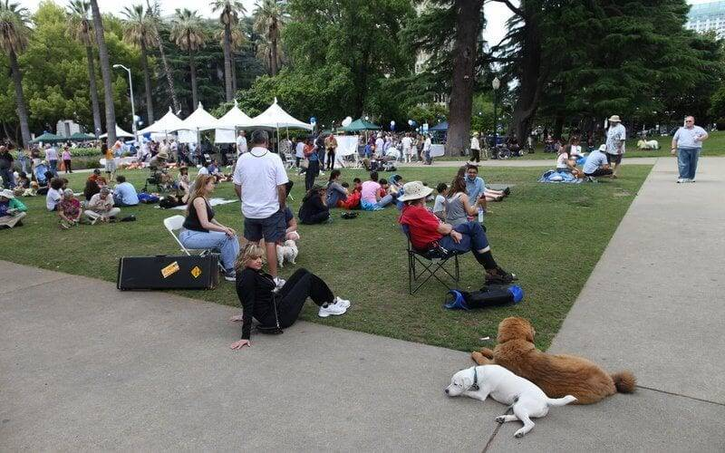 dog training festival