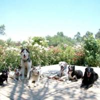 Dog Behavior Problem Solving