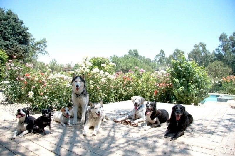 dog trainers sacramento