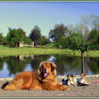 DOG TRAINING PLACERVILLE CA