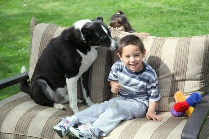 dog training in sacramento with children