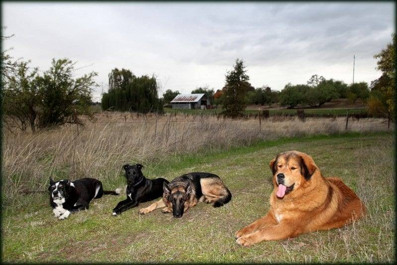 service dog sacramento