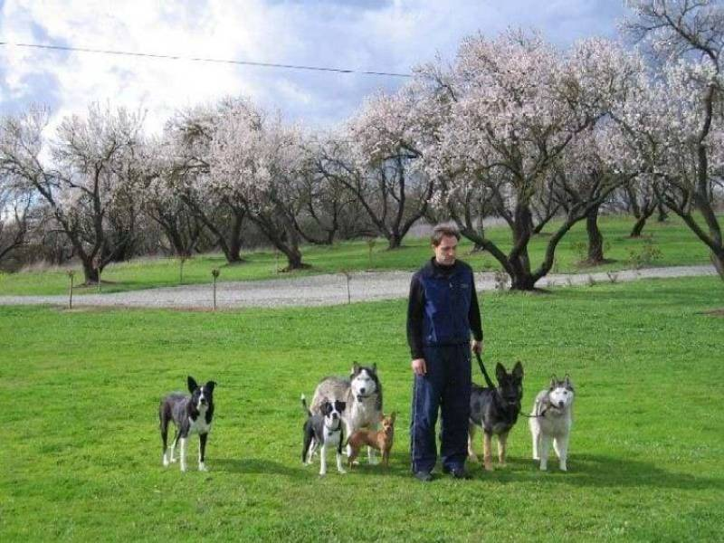 dog trainer in sacramento