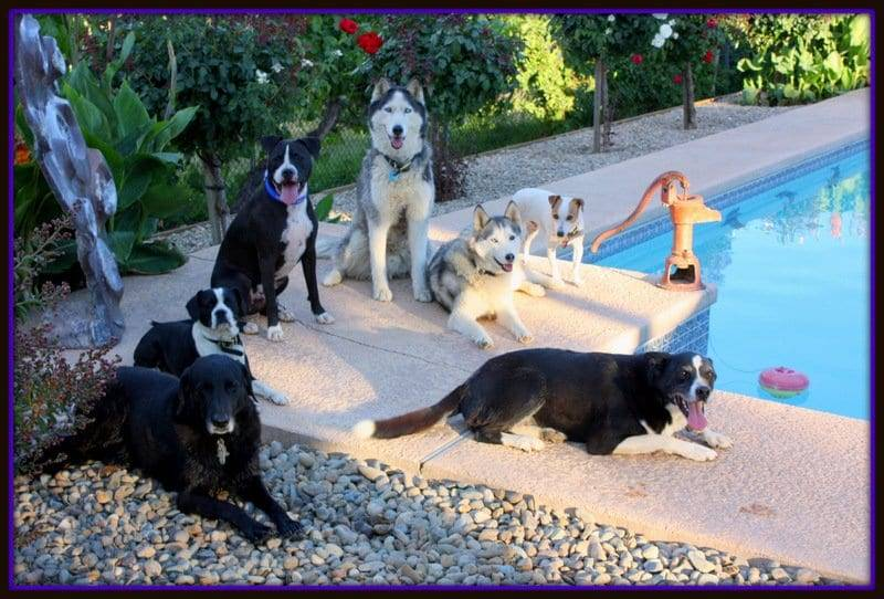 Amazing dog training