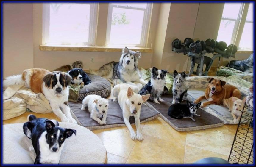 Service dog and emotional support dog training.