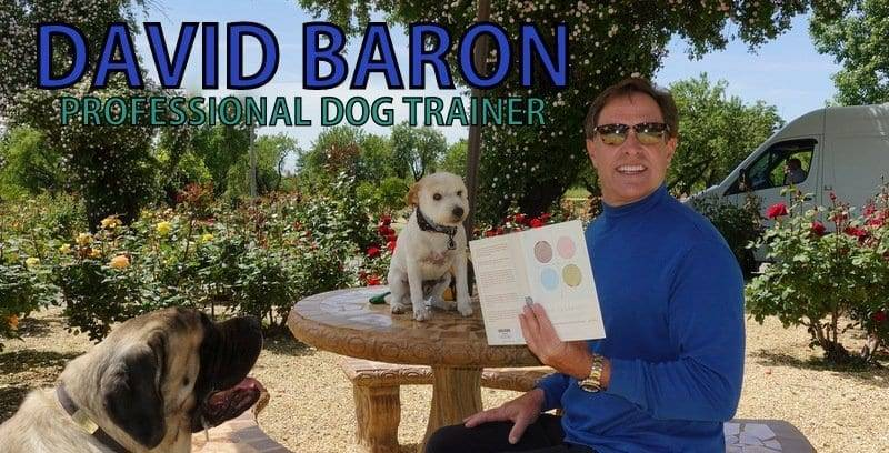 David Baron Dog Training Sacramento | Dog Trainer
