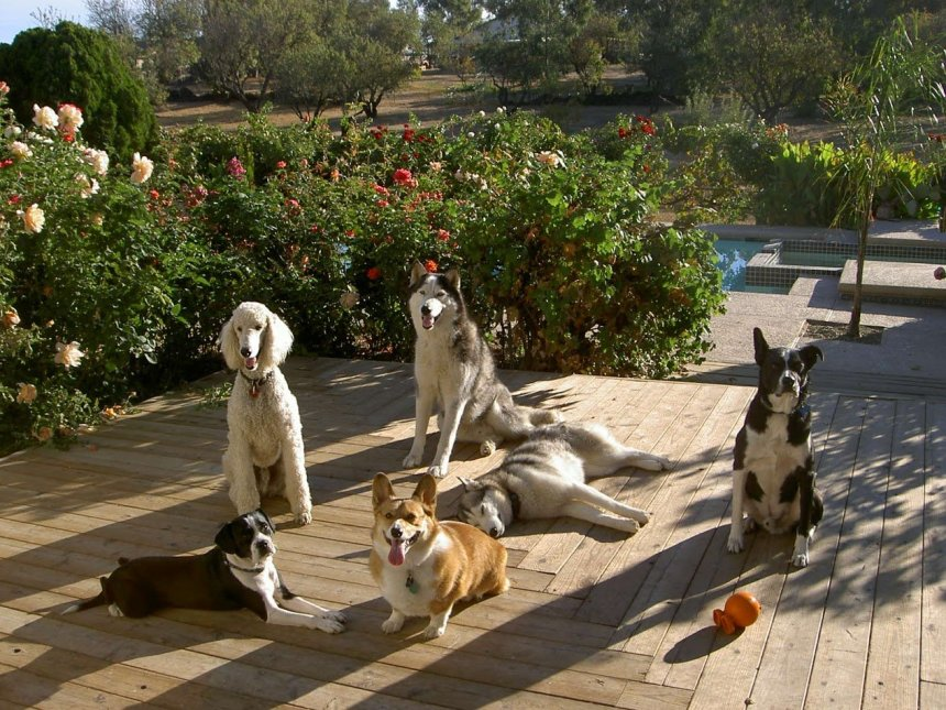 Multiple Service Dog Household.