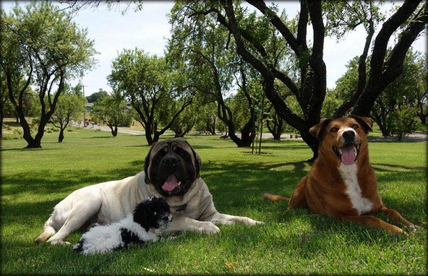 Emotional Support Dog School of America