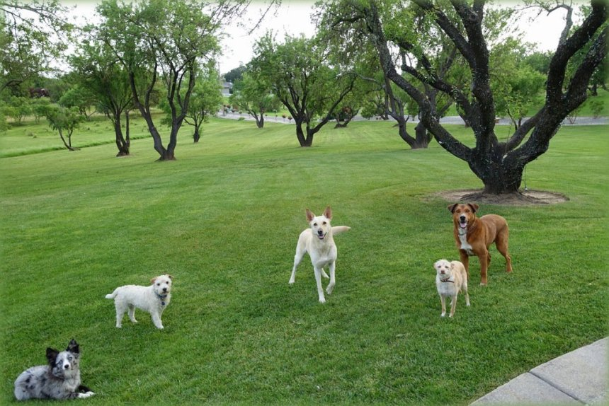 Off-Leash Service Dogs and Emotional Support Animals