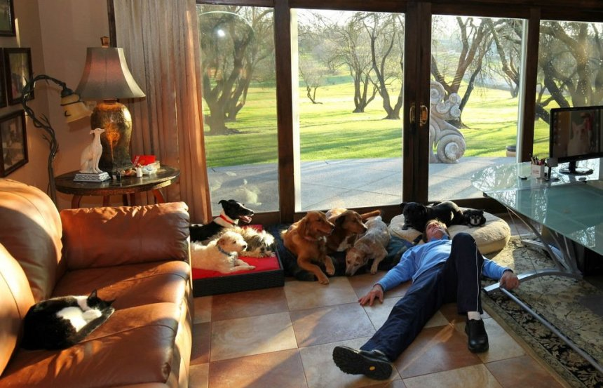 Overview of Service Dog law