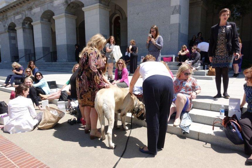 Emotional Support Dog Trainers Sacramento