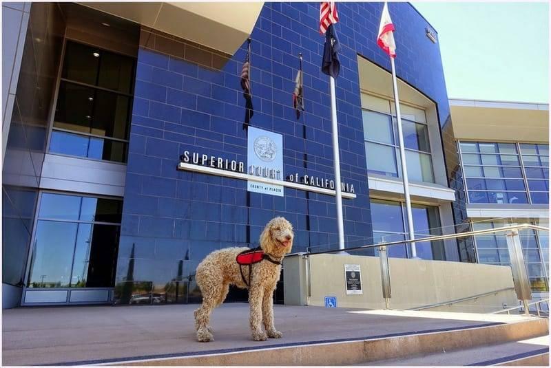 Service Dog School california