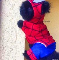 dog-spiderman-costume - Superfame