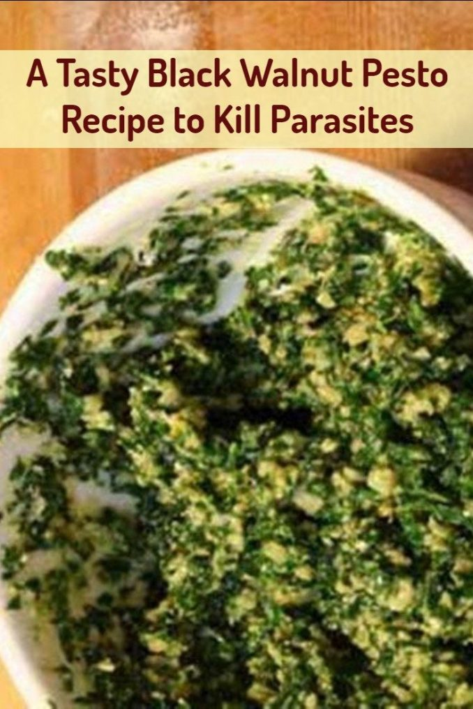 A Tasty Black Walnut Pesto Recipe to Kill Parasites