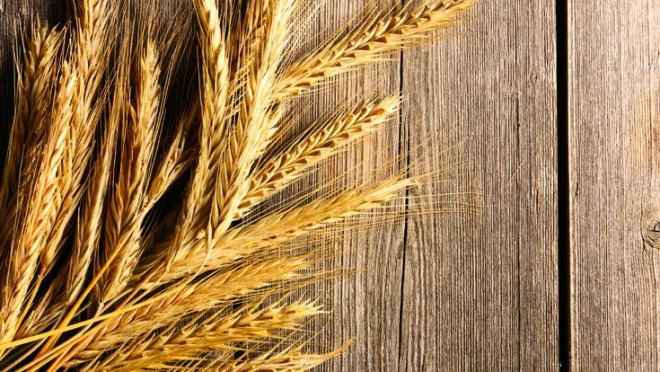 health benefits of wheat germ