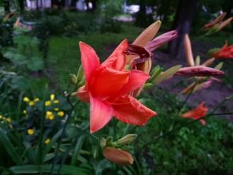 Пример фото на Sony Xperia XA1
