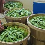 Matt's Green Beans
