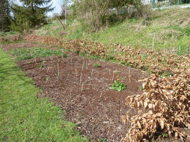 Perennials Rule (2/6)