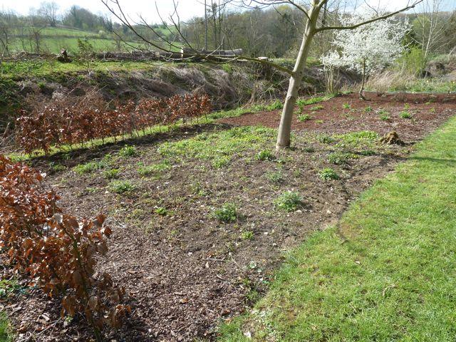 Perennials Rule (3/6)