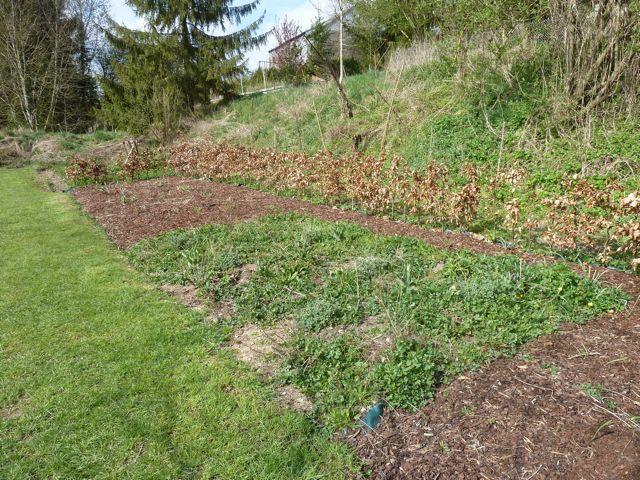 Perennials Rule (4/6)