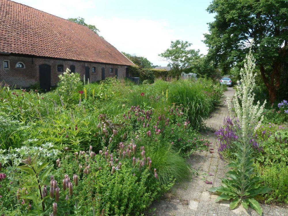 Oudolf's Gardening Inspiration (2/6)