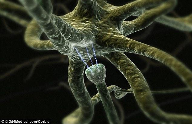 sinaps