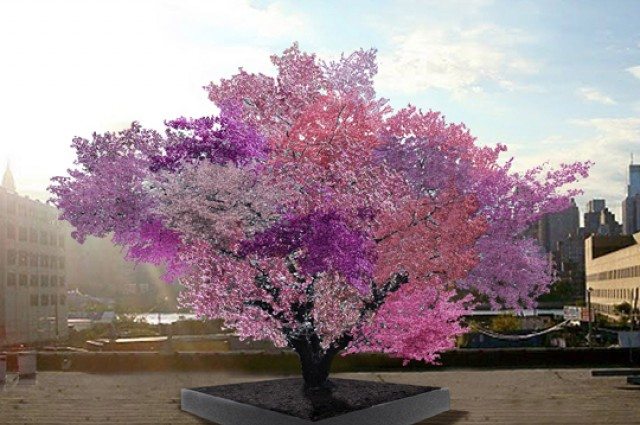 tree-of-40-fruit