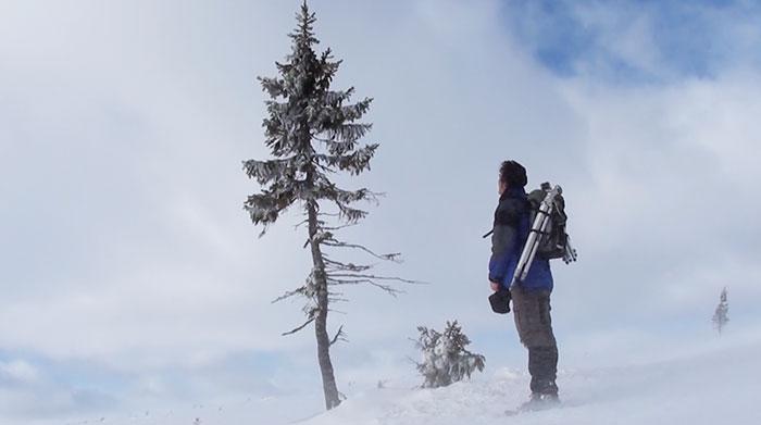oldest-tree-old-tjikko-sweden-22