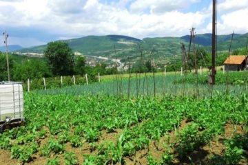 Obavijest poljoprivrednim proizvođačima – proizvodnja krmnog bilja