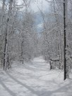 Untracked section of the ski trails