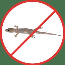 Lizards Pest Control Service