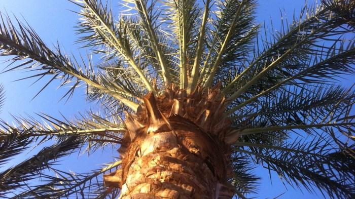 paln tree