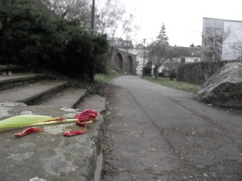 Verdorrte Blume - Kunstprojekt – Anfang eines Hobbies (Teil 1/Fotoserie)