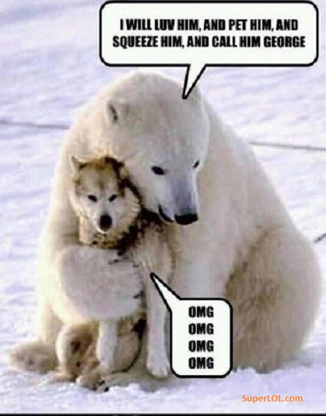 Polar bear meme - SuperLOL