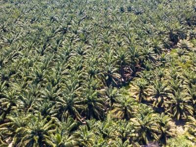 Sind Palmöl und Palmkernöl grundsätzlich ungesund und ökologisch bedenklich?