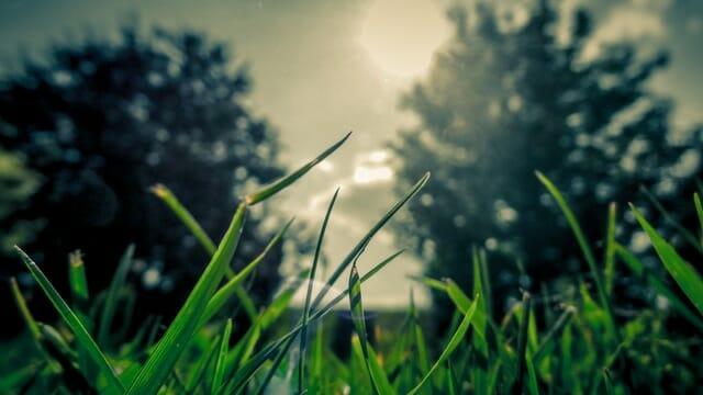 Loving the Environment for Kids: 5 Tips for Raising Eco-Friendly Offspring