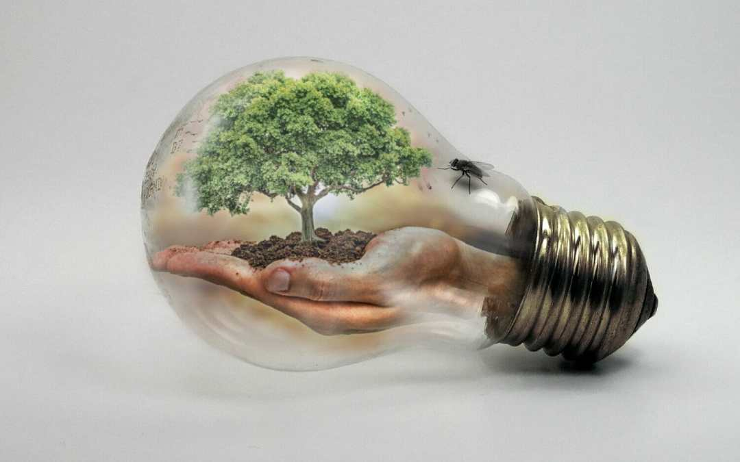 Green Home Hacks to Save Money and Save Mother Earth