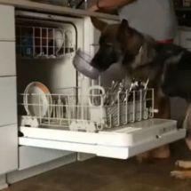 Viral vídeo de perro que ayuda a su amo con tareas domésticas