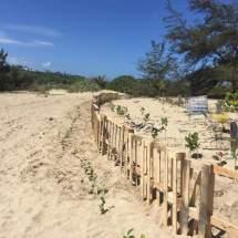 Trabajan en la restauración ecológica de playa Secret Spot en Isabela.