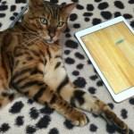 iPadと戯れる。