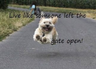 Dog Live like someone left the gate open