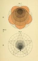Geometrical_Psychology_BW_Betts06
