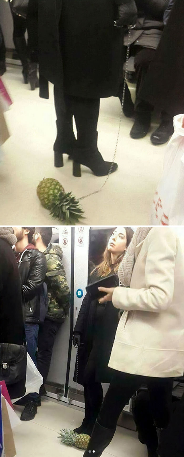 Emotional Support Pineapple?