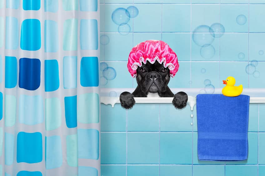 Big Dog, Small Tub: Bathing Solstice in an RV Shower - Supersize Life