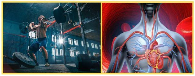 Compound training. Muscular Endurance. Cardiac output. Cardiovascular system.
