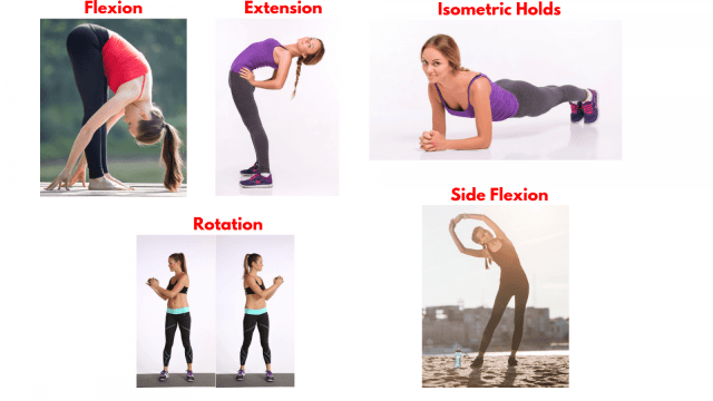 Core movement. Flexion. Extension. Isometric Holds. Rotation. Side flexion.