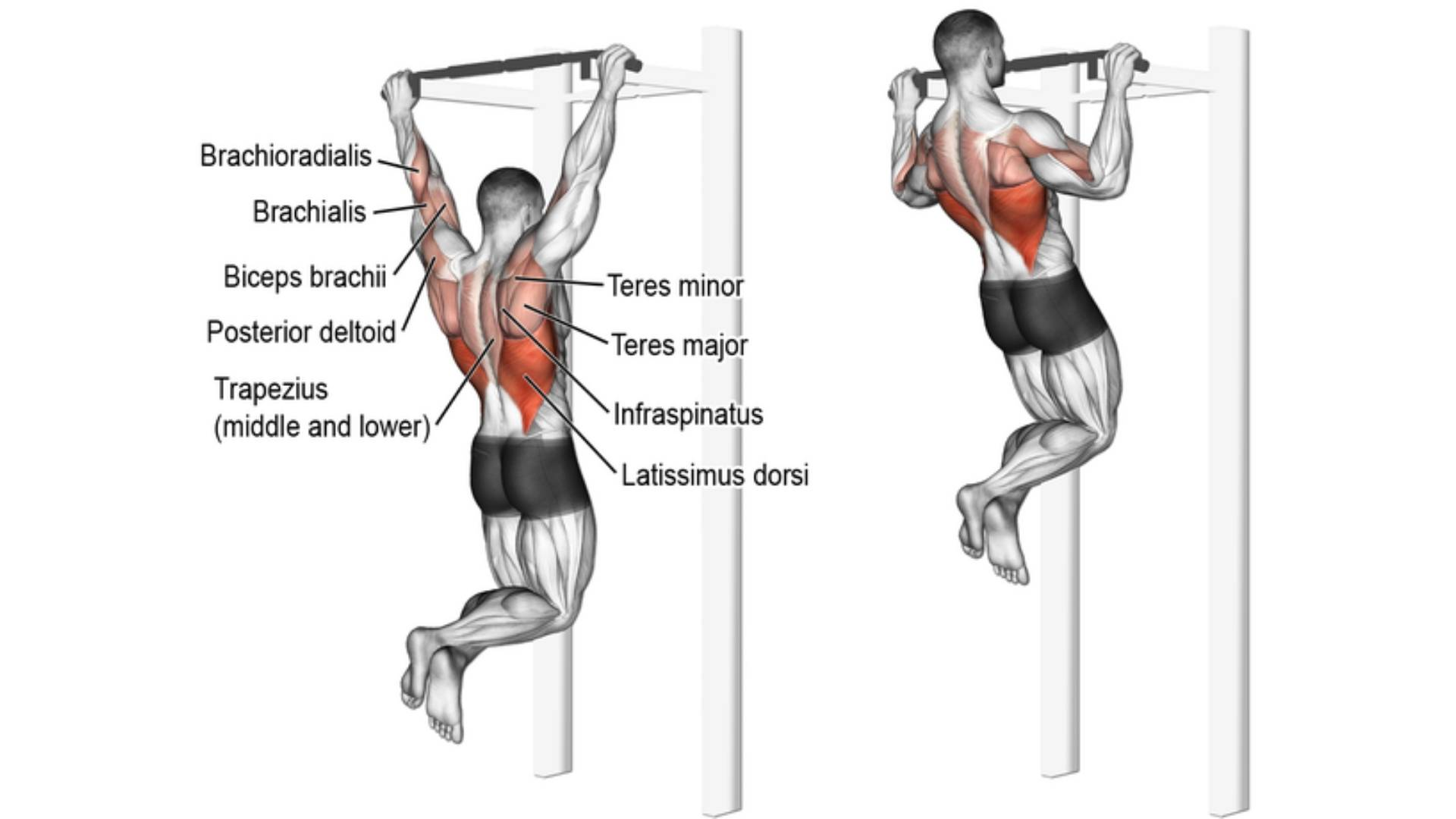 How to do a Pull up. Upper body strength. Exercises for ...