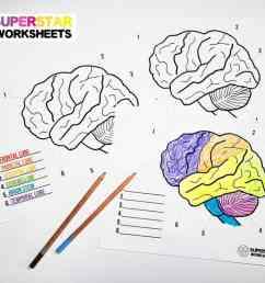 Human Brain Worksheets - Superstar Worksheets [ 768 x 1024 Pixel ]