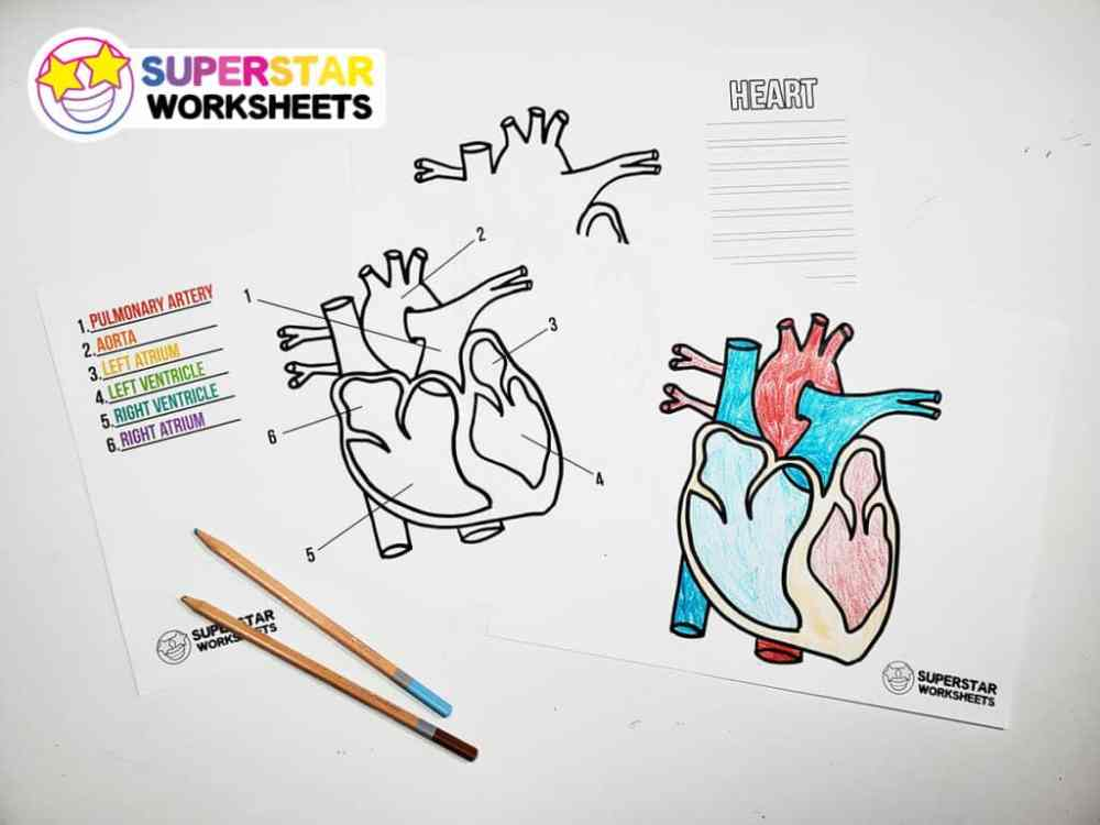 medium resolution of Heart Worksheets - Superstar Worksheets