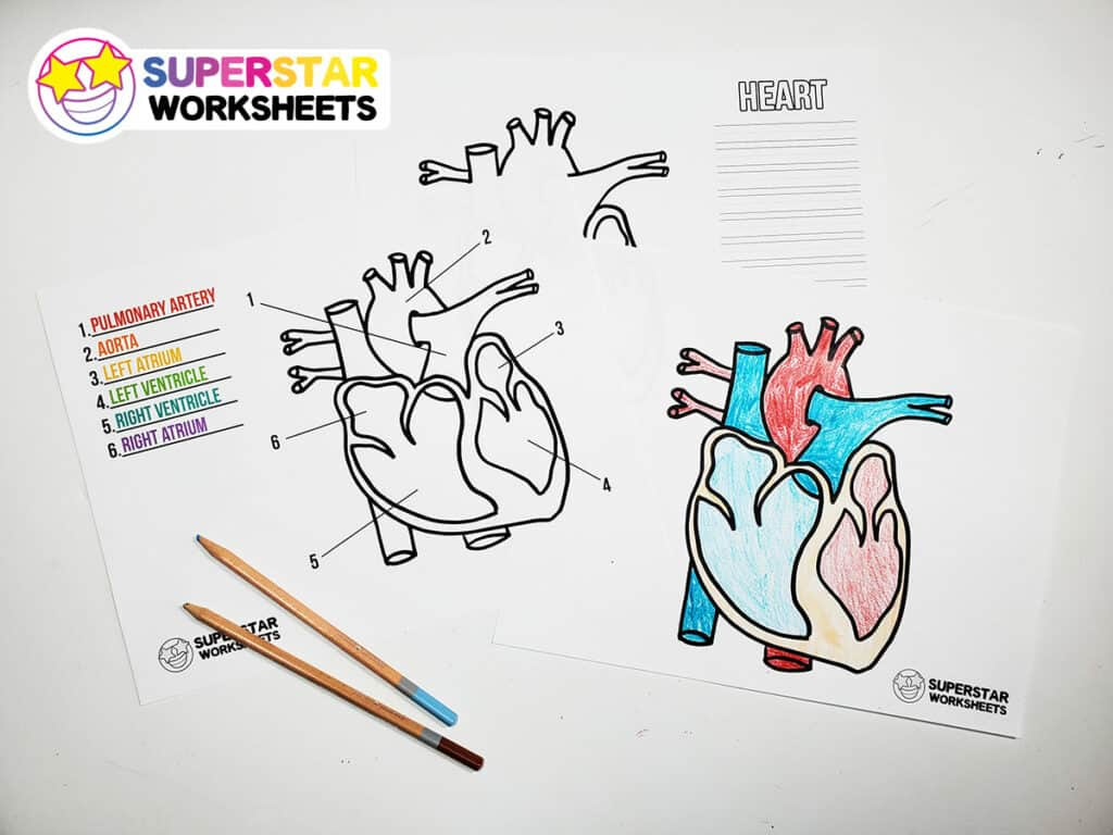 hight resolution of Heart Worksheets - Superstar Worksheets